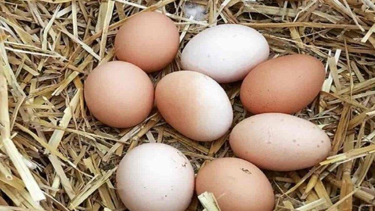 Uova, un alimento completo e molto nutriente